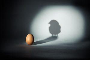آموزش عکاسی تخم مرغ