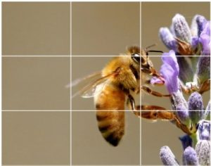 قانون یک سوم در عکاسی چیست