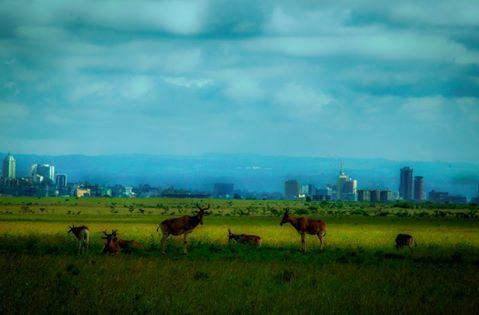 عکس محیط زیست